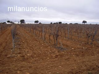FINCA TOLEDO A 120 KMS MADRID - foto 3