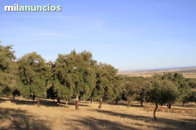 CÁCERES - foto 3