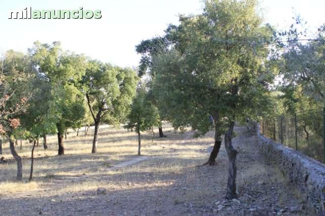 CÁCERES - foto 6