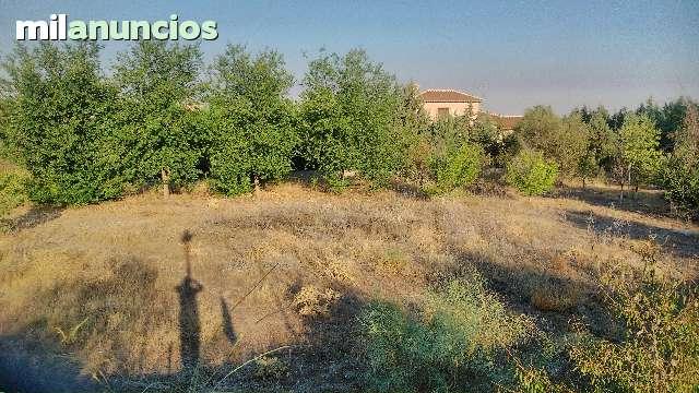 SAN BERNARDO- CIGARR - CALLEJON DE LOCHES  6 - foto 2