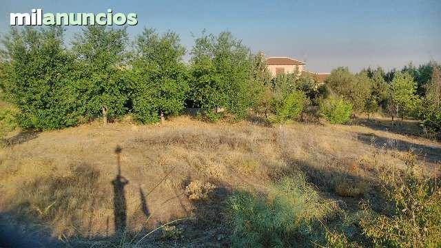 SAN BERNARDO- CIGARR - CALLEJON DE LOCHES  6 - foto 6