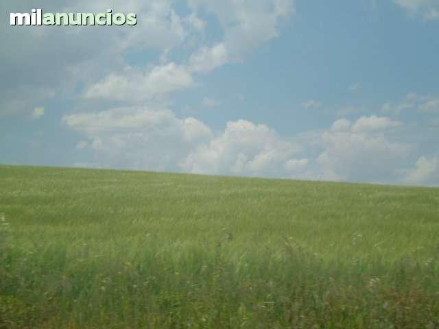 CARRETERA DE MULA - foto 3