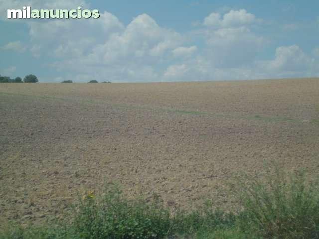 CARRETERA DE MULA - foto 7