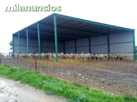 INVERNADEROS Y COBERTIZOS - foto 4