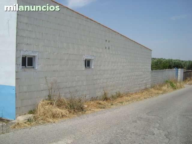 ALCUESCAR (CACERES) - foto 4