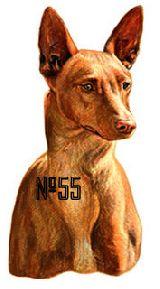 Perros de caza  pegatinas-adhesivos - foto