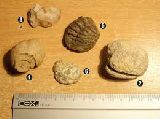 Fosiles - foto