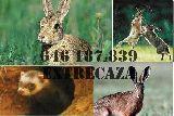 Se venden conejos, liebres etc - foto