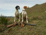 Adiestramiento perros de caza - foto