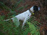 Adiestrador de perros de caza - foto