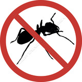 #termitas 935347950 patologias xilofagos - foto