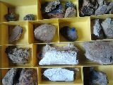 fosiles de crustaceos - foto
