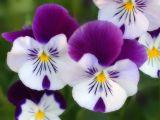 floristerias emprendedor - foto