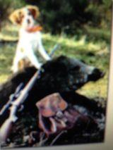 caza menor,  corzo y jabali.  2021/22 - foto