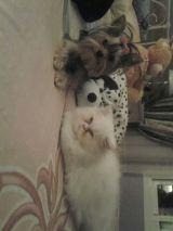 peluqueria y residencia canina y felina - foto