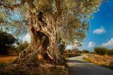 mudanzas-transportes Balears art i llar - foto