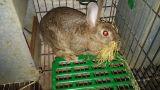 Venta conejos de monte - foto