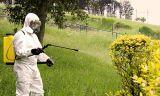 Control de plagas en tus plantas. - foto