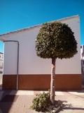 Jardinero - foto