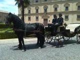 coche de caballos - foto