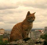 Fotografo de mascotas - foto