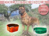 Biothane para perros de rehala - foto