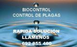 Fumigar  control plagas, ratas 692855460 - foto