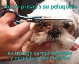 : : ;: : :  -- PELUQUERO CANINO-: : : : : : : : :  - foto