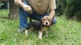 Proxima camada de Beagles - foto