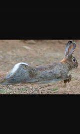 Conejos de monte - foto