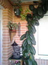 PARTICULAR VENDE PLANTAS - foto