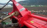 PEGATINAS AGRIC BMR 80,  NOLI ,  TORPEDO - foto