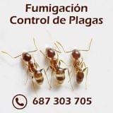 Fumigación - Control Plagas Sevilla - foto