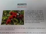 ARBOL DE ACHIOTE - foto