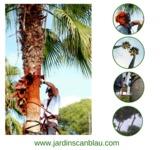 Poda de palmeras - jardinería-jardinero - foto