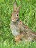 Vendo carne de caza (Perdiz, conejos) - foto