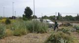 Jardinero autonomo economico! - foto