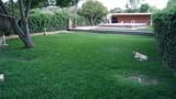 jardinero especializado - foto