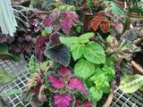 jardineria garden luz - foto