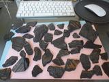 Fosiles de helechos - foto