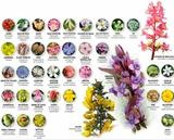 Terapia Con Flores de Bach - foto