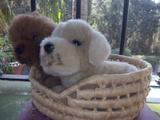 Perritos peluches en cesta NUEVOS - foto