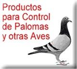 Control de aves, (palomas), con Rapaces. - foto