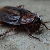 Fumigar cucarachas en Murcia - foto