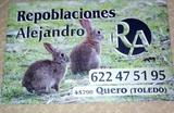 Se venden conejos de monte - foto