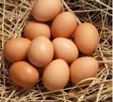vendo huevos camperos - foto