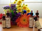 Terapia Flores de Bach - foto