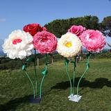 Alquilo flores gigantes - foto