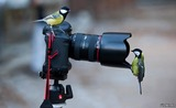 Fotógrafía y Vídeo - foto