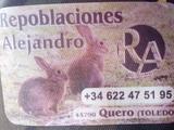 Conejos de monte/puros - foto